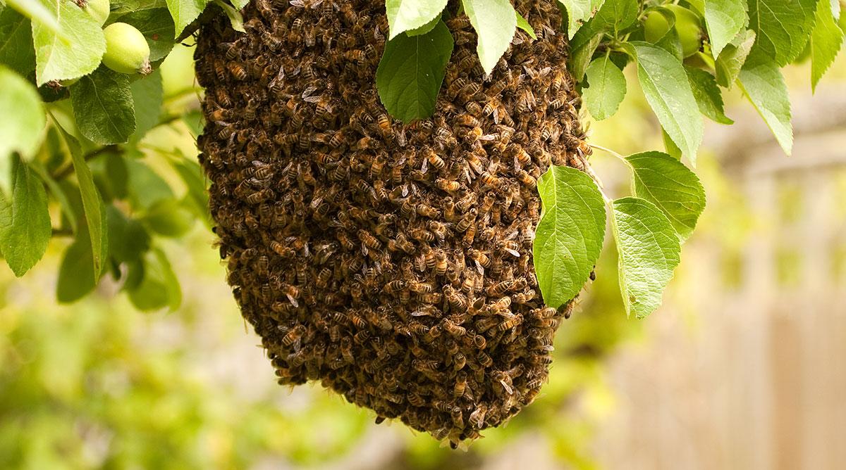 bee hive colony